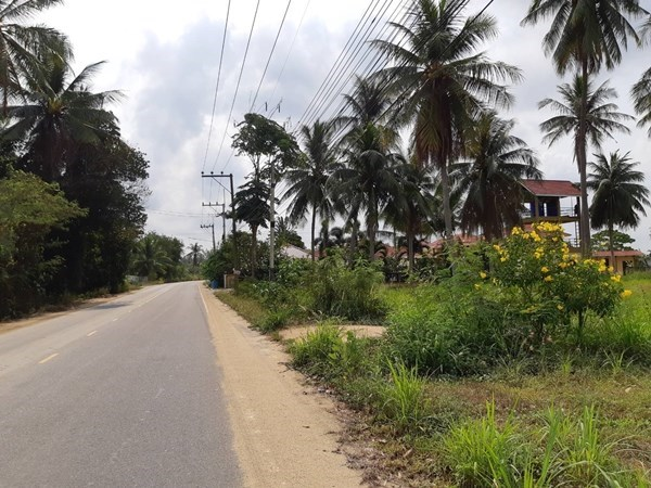 Nice land plot in Pong area - Land -  -